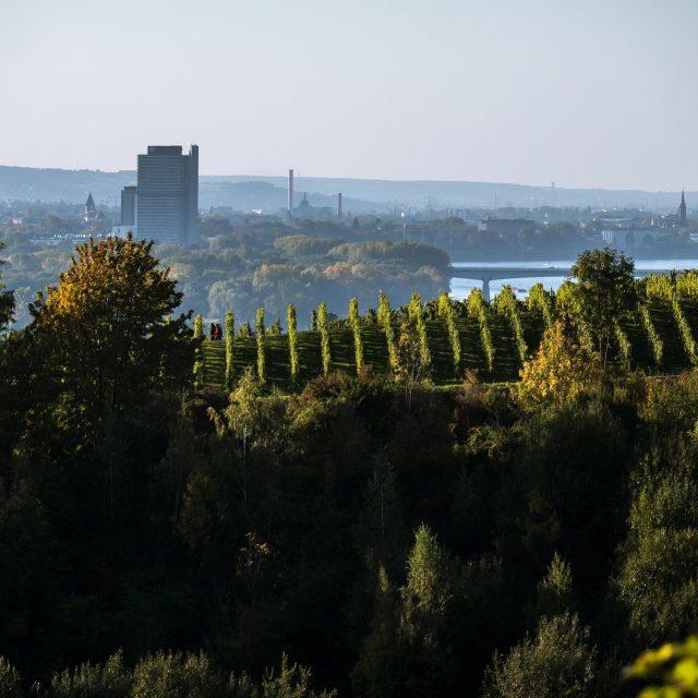 Ausflug nach Bonn, die Skyline von Bonn mit Natur