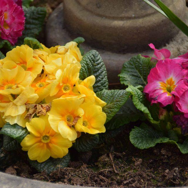 Blumen Ferienwohnung Vogt Mertloch